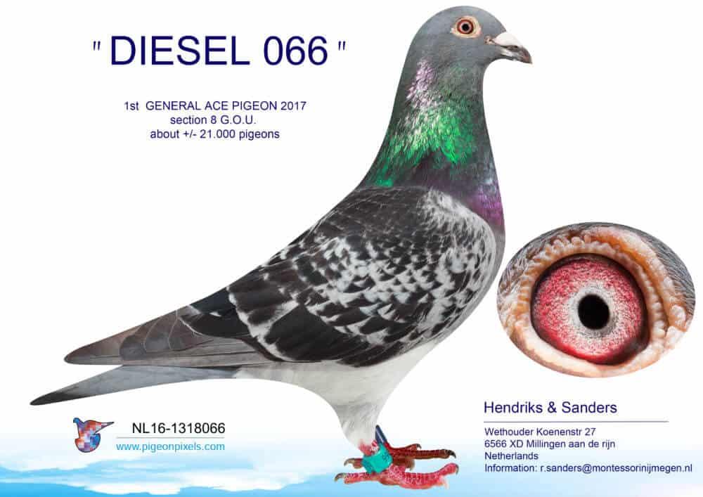 DIESEL 066